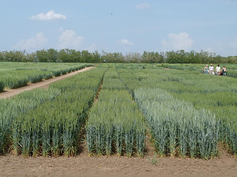 General view of the Common Garden experiment