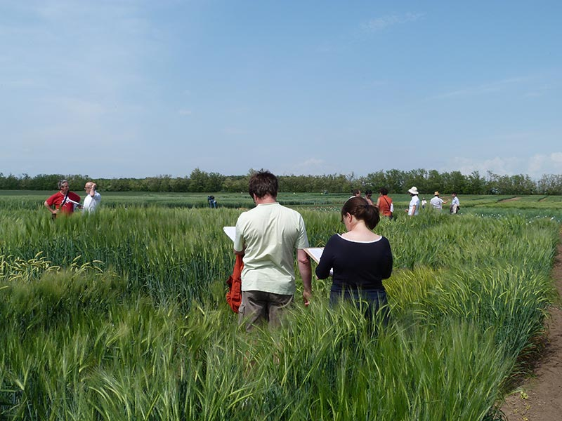 Members of the consortium scoring barley