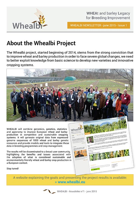 whealbi-newsletter-1